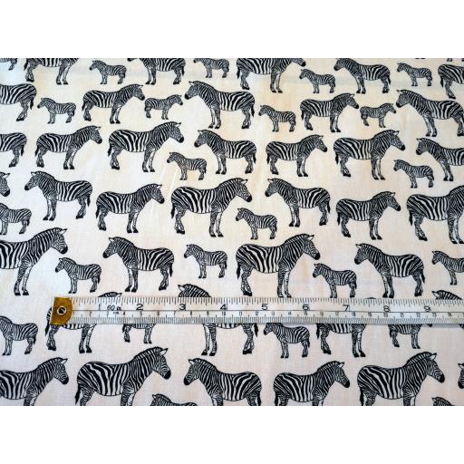 Black zebra.jpg