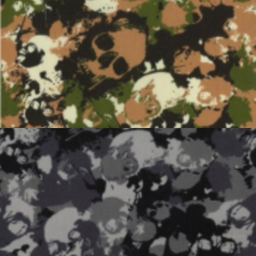 Camouflage skulls cotton poplin